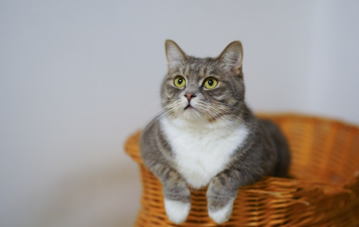 White and Gray Cat in Brown Woven Basket