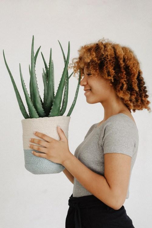 Mulher, segurando, vaso, aloe, vera, planta