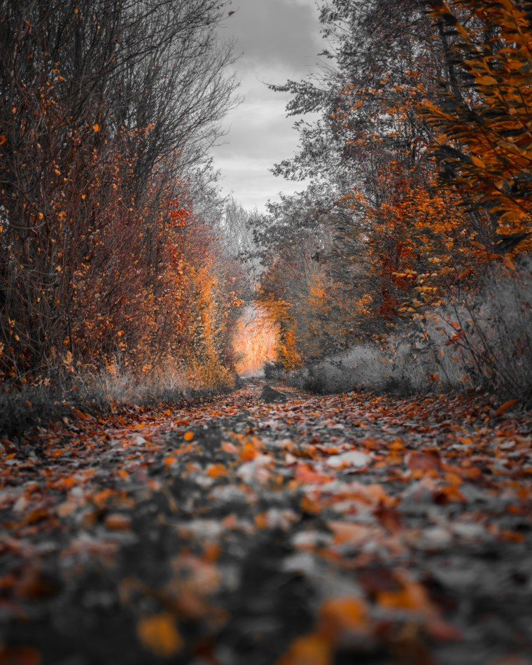 photography of fall trees