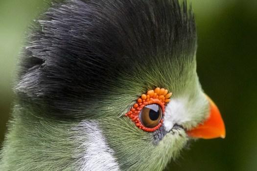 Free Stock Photo Of Bird Parrot Toucan