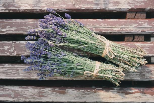 bunches of lavendar