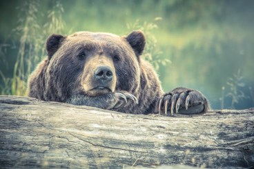 animal, animal photography, bear