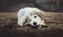 Shallow Focus Photo of Long-coated White and Gray Puppy