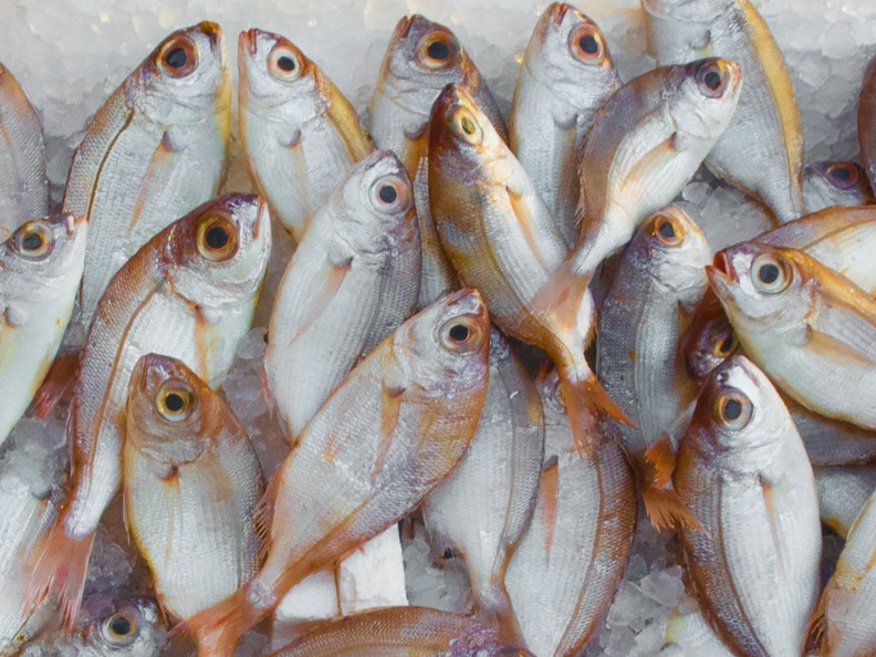 catch, fish, fish market