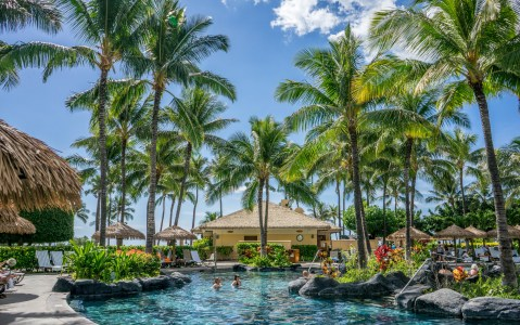 Coconut Tree Lot