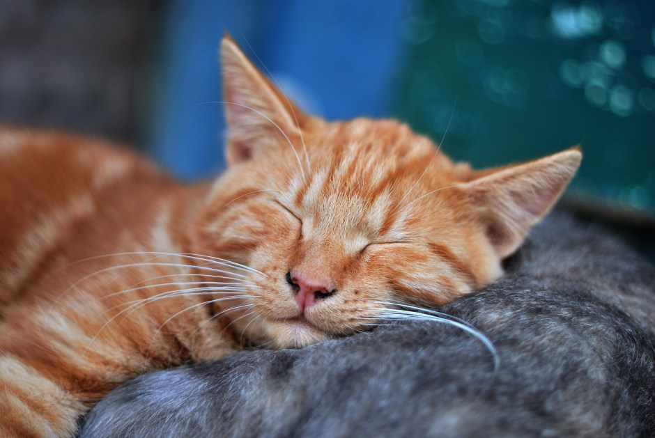 5-reasons-to-exercise-sleep