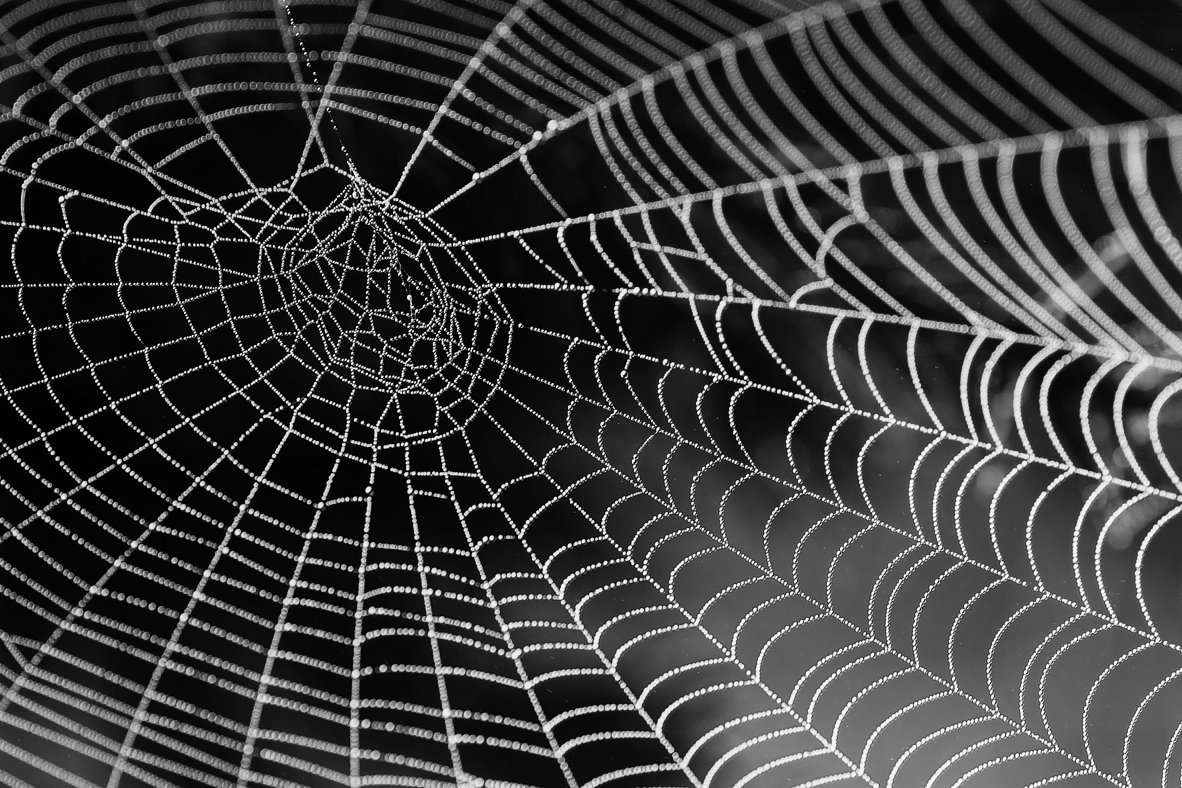 1000 Engaging Spider Web Photos Pexels Free Stock Photos