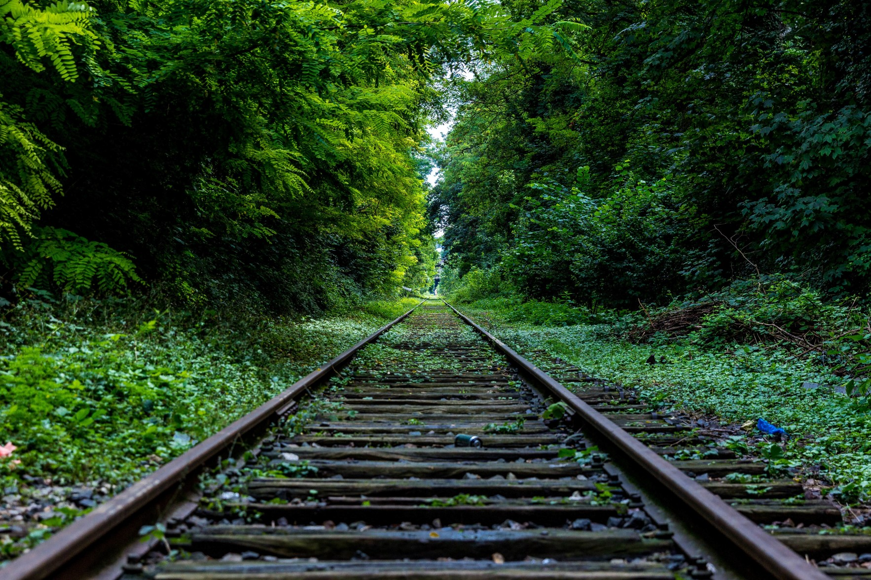 Railway Surround by Trees