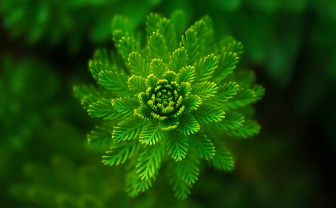 abstract, green, plant