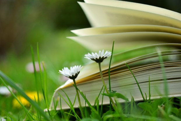 blur, book, book pages, flowers