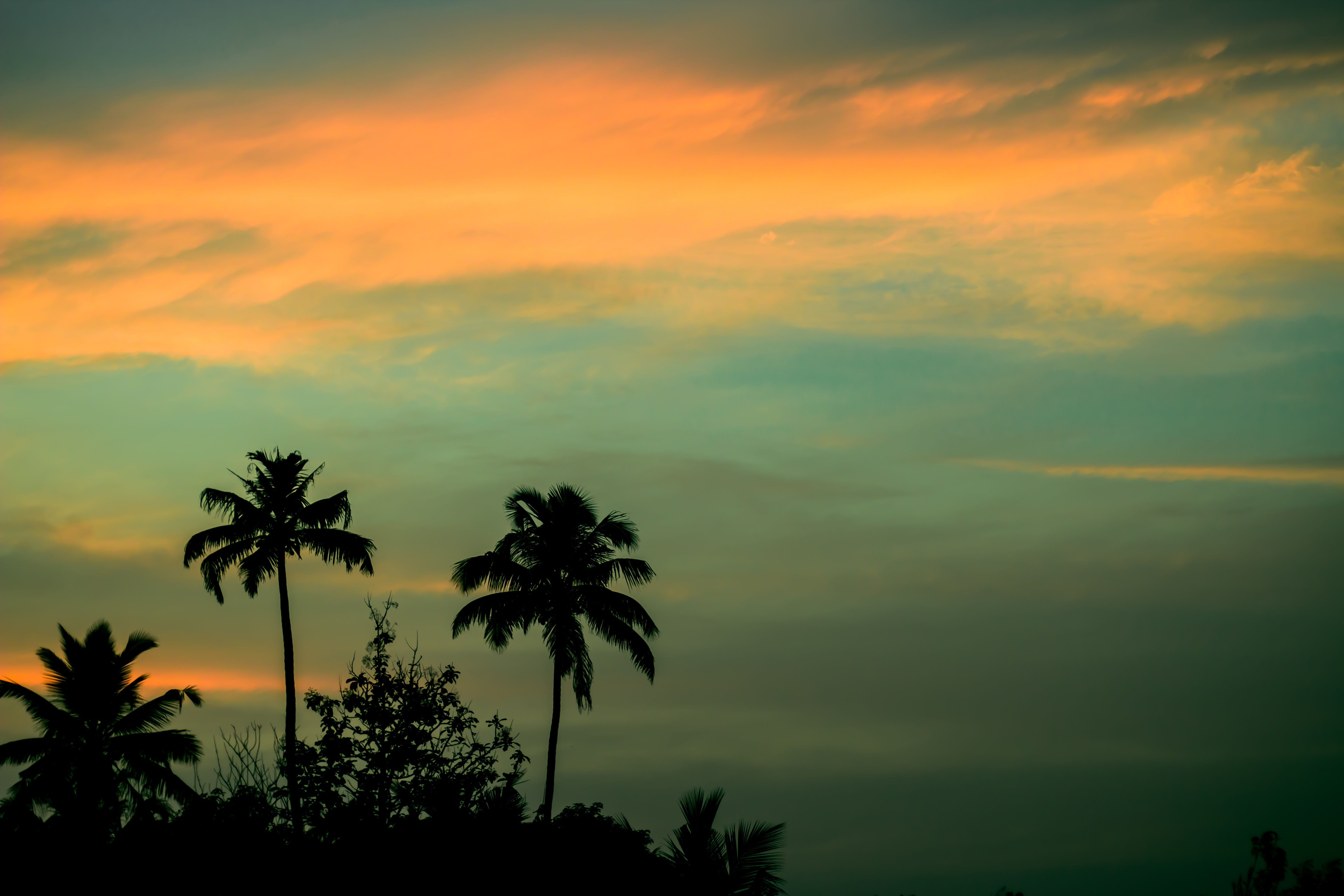 Coconut Tree During Sunset 183 Free Stock Photo
