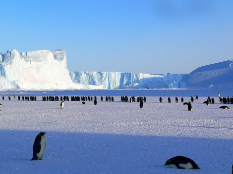 animals, antarctic, antarctica