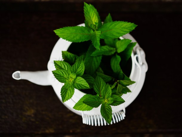 peppermint tea leaves in a tea kettle