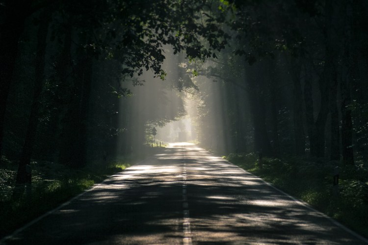 Gray Asphalt Road Surrounded by Tall Trees
