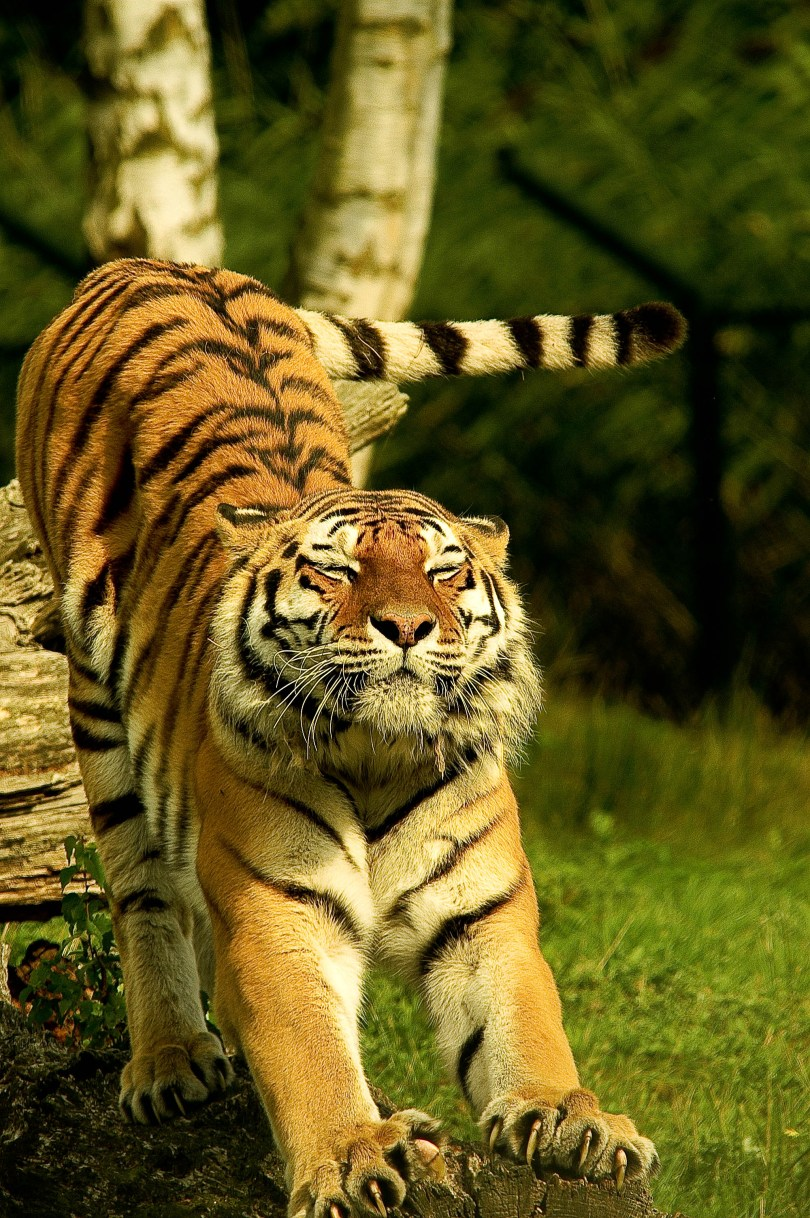 Tiger Shroff, Disha Patani booked for violating pandemic norms by roaming at public place