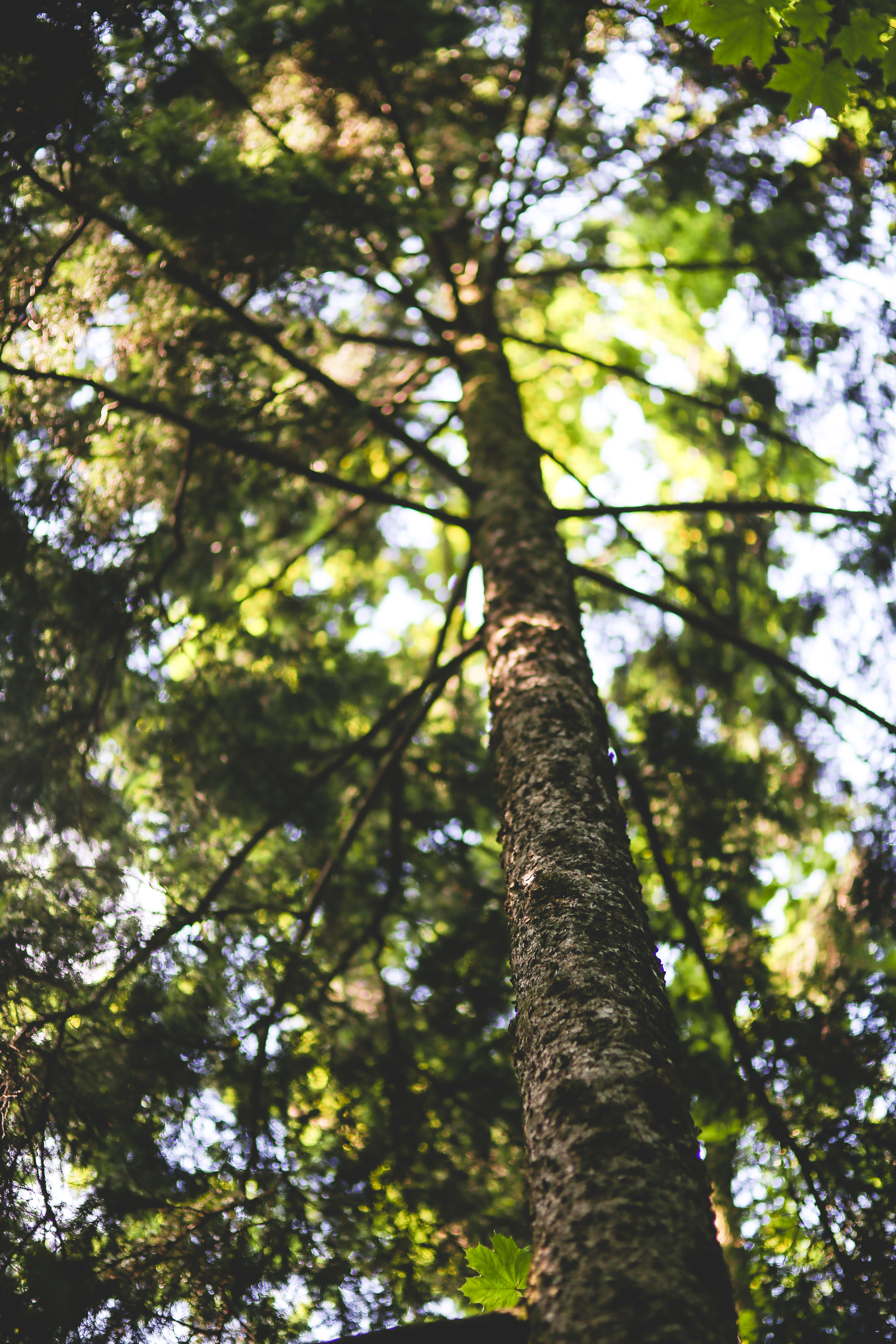 Free Stock Photo Of Bark Flaking Forest