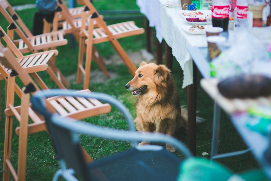 Cute dog sitting under the table