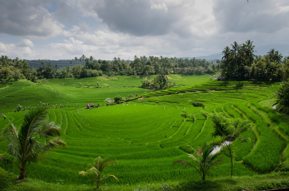 Image Result For Bali New Year