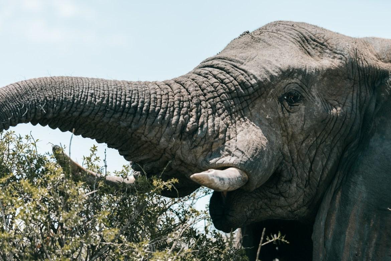animal trunk park big