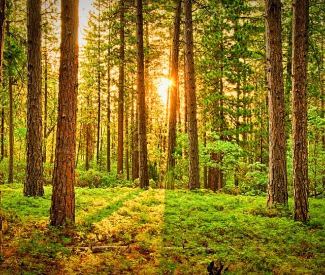 Interesting Green Forest Photos Pexels Free Stock Photos