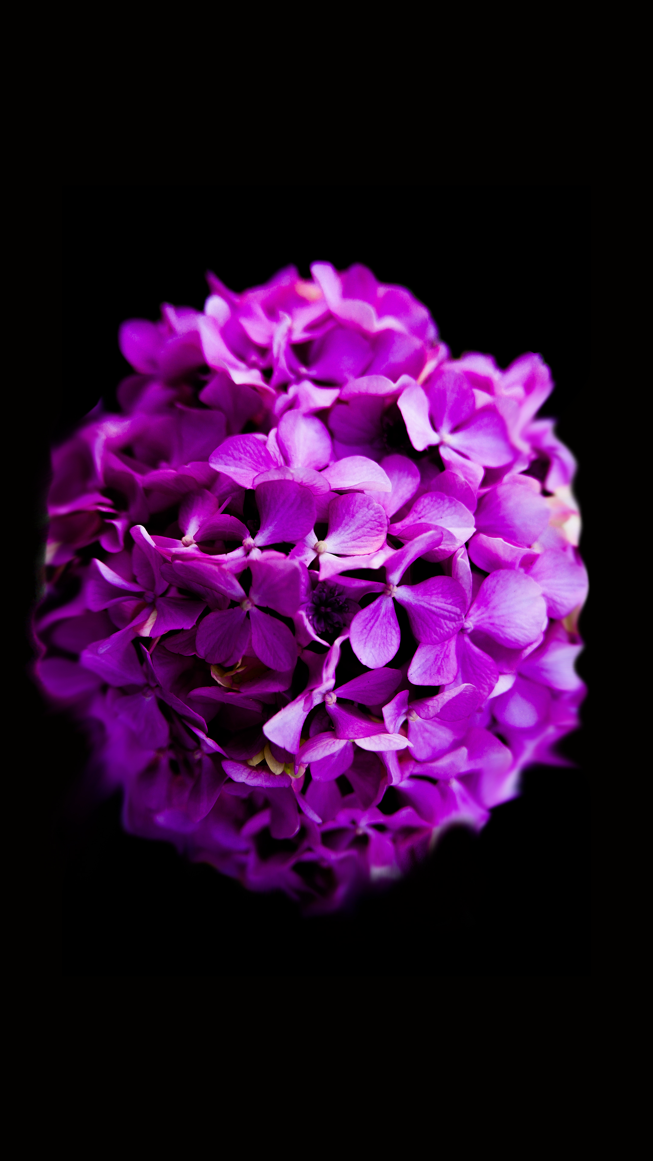 Close Up Photography Of Purple Petaled Flower 183 Free Stock
