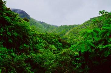 alberi, boschi, el yunque