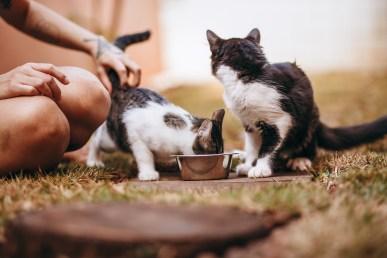 Immagine gratuita di addomesticato, adorabile, alimentatore