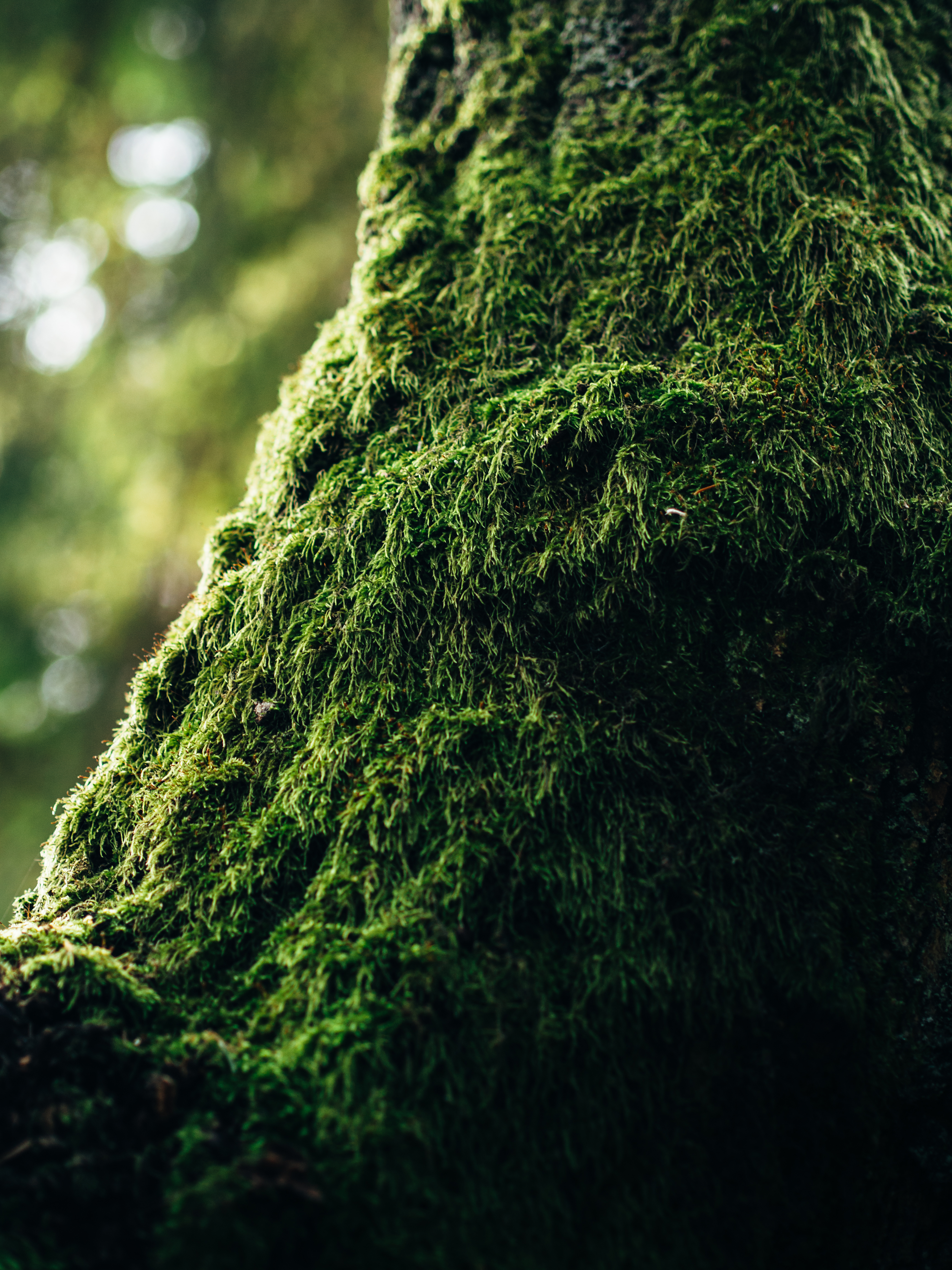 Green Moss In Tilt Photography Free Stock Photo