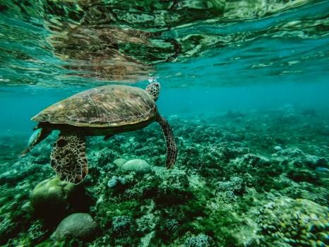 Foto de una tortuga bajo el agua