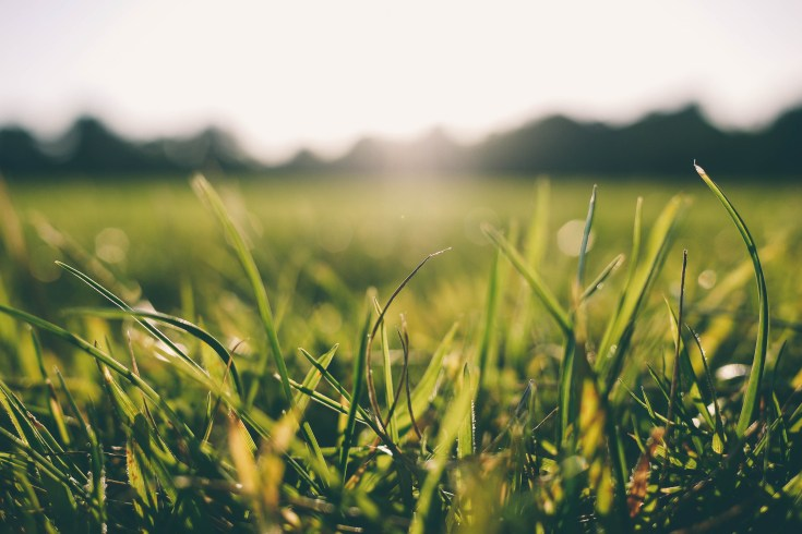 Selective Focus Photography of Green Grass Field