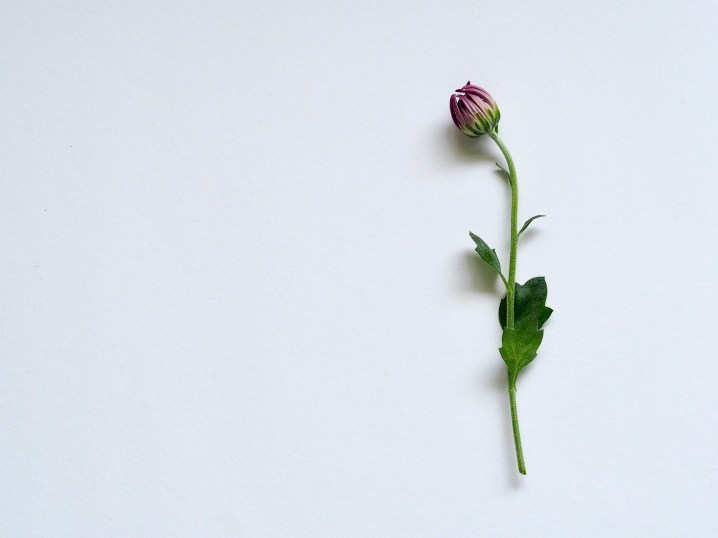 Purple Petaled Flower on White Surface