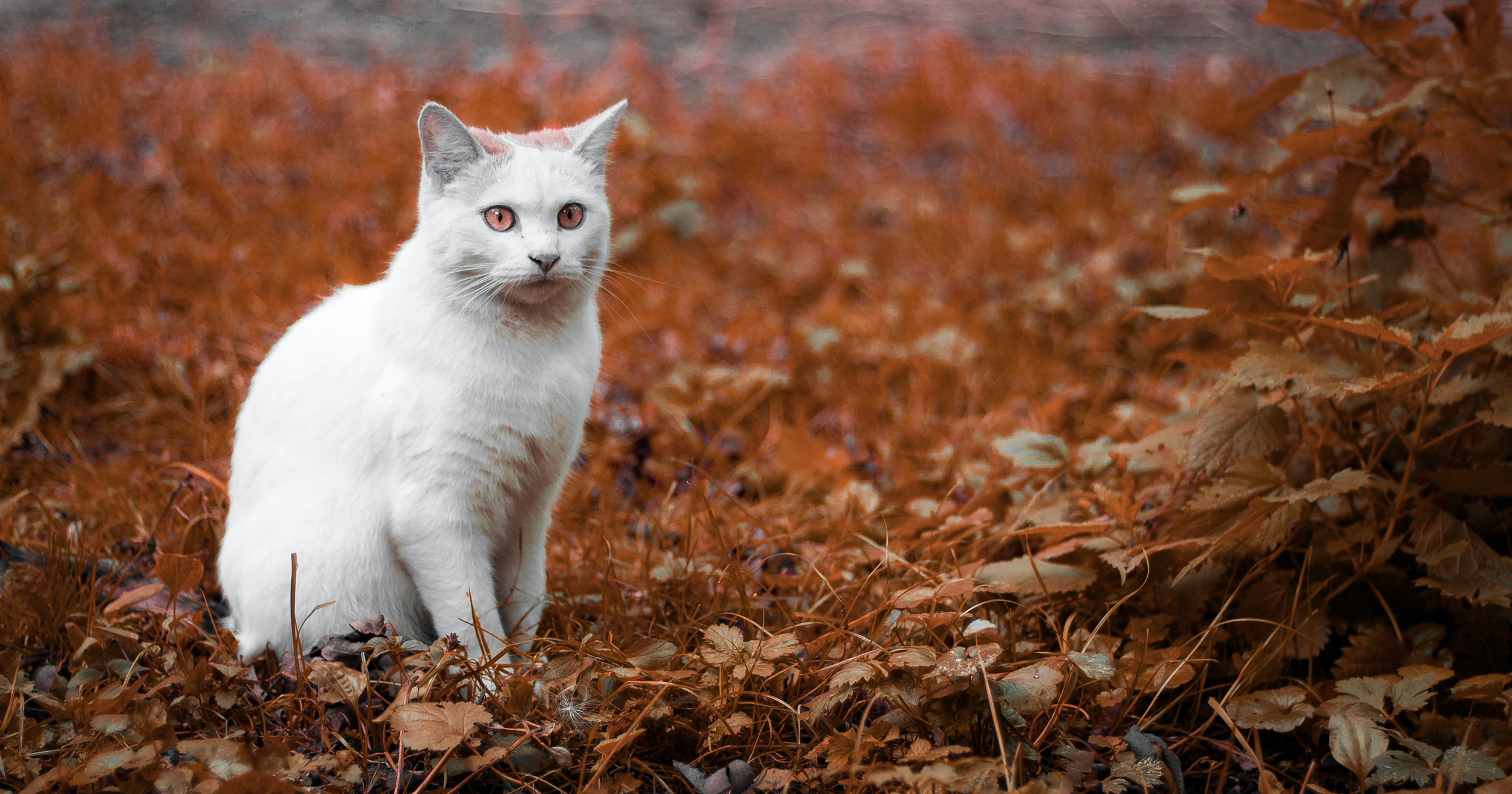 South Lebanon Township launches trap, neuter, and release program