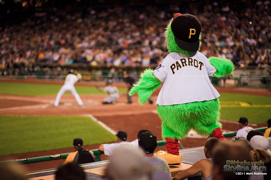 The Pirate Parrot eggs on the opposition