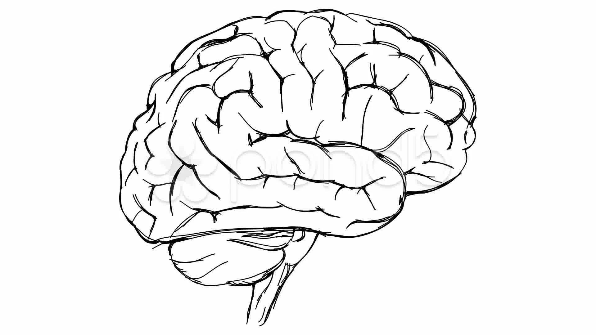 Brain Sketch Video Clip Royalty Free