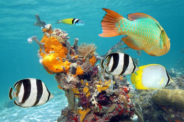 Royal Caribbean Cruise Spring Break