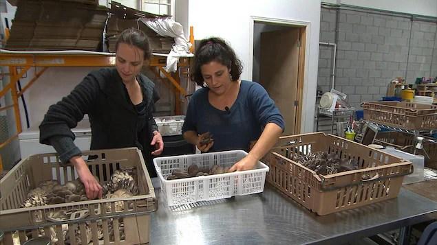 Lysiane Roy-Maheu et Dominique Lynch-Gauthier ont créé l'entreprise Blanc de gris.