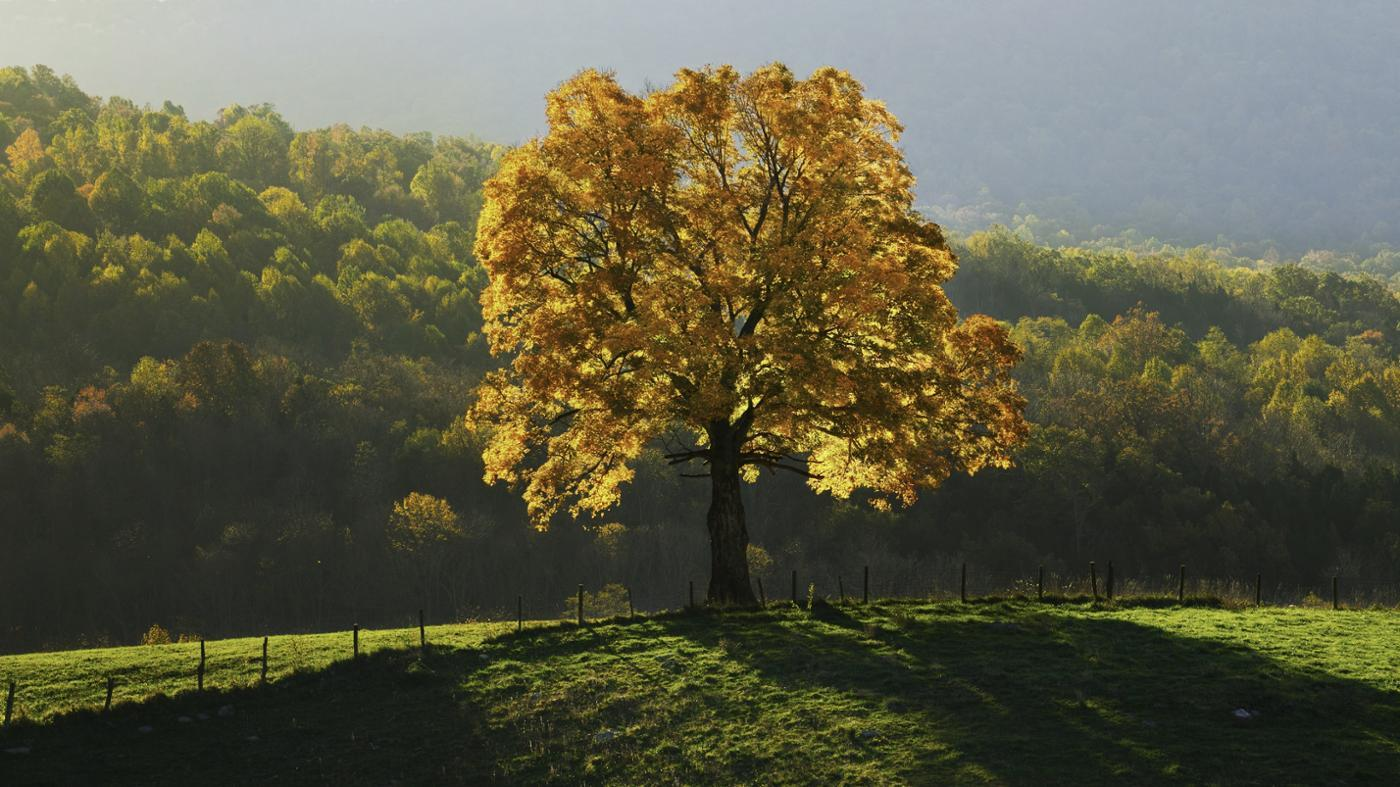 Characteristics Of The Four Seasons