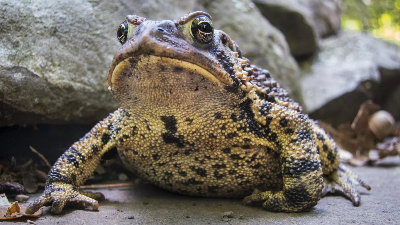 What Do Frogs And Toads Eat
