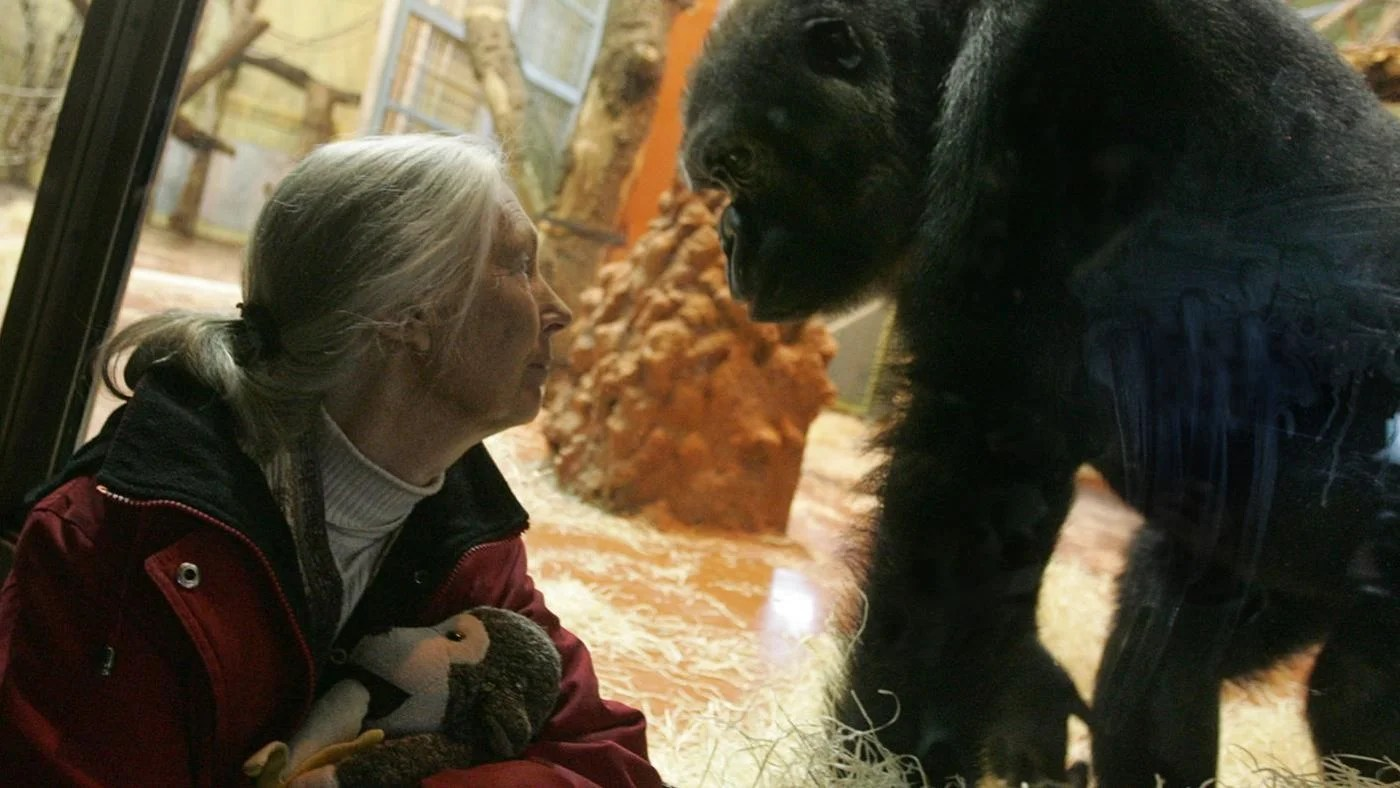 How Did Jane Goodall
