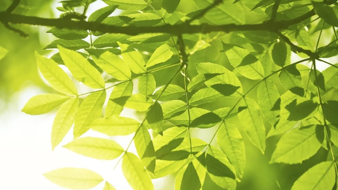 What Releases Oxygen In Photosynthesis