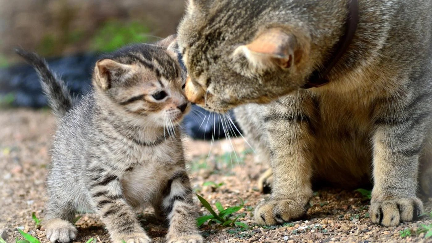 How Do Various Animals Take Care Of Their Young
