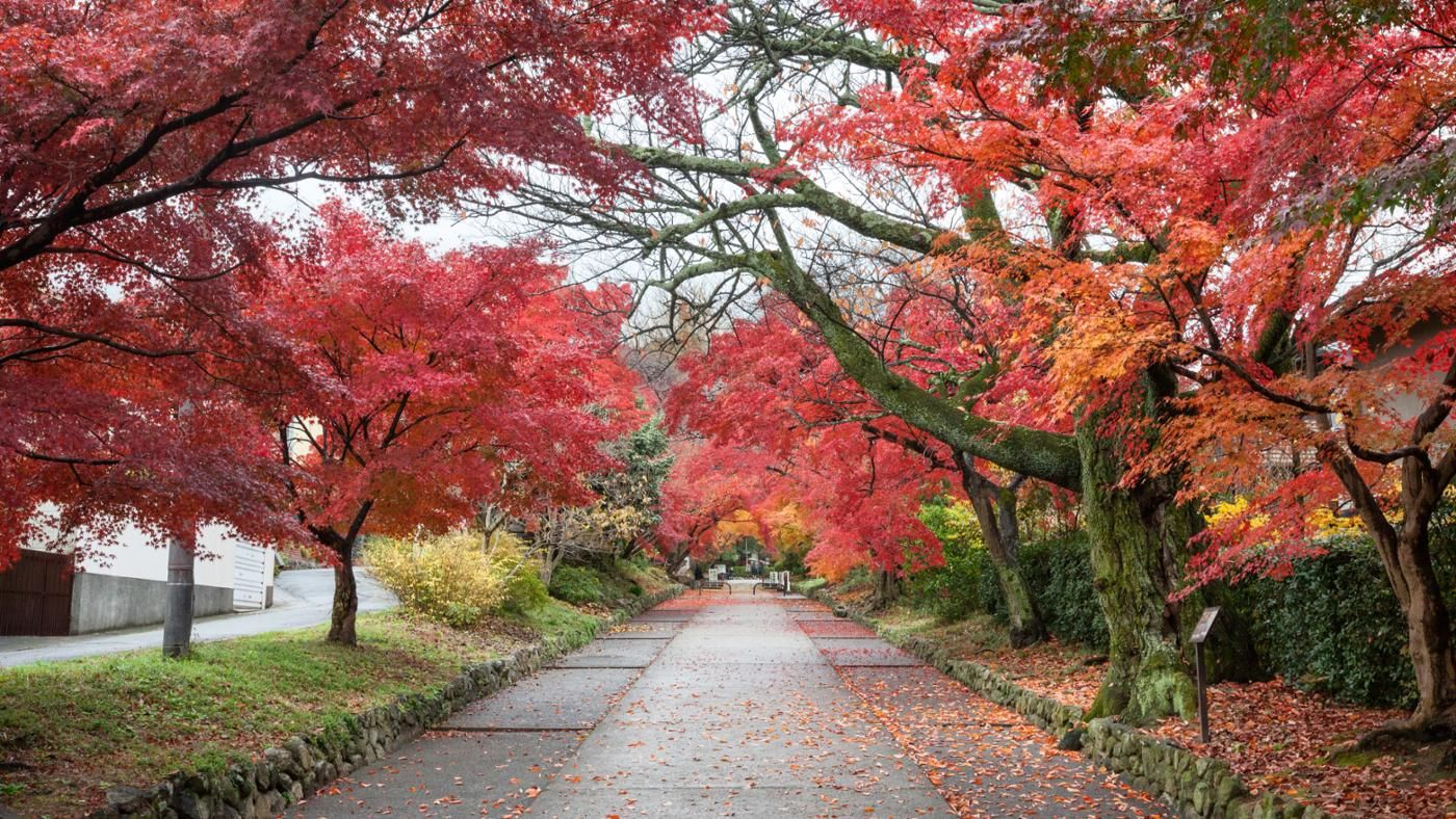 What Are The Different Types Of Maple Trees