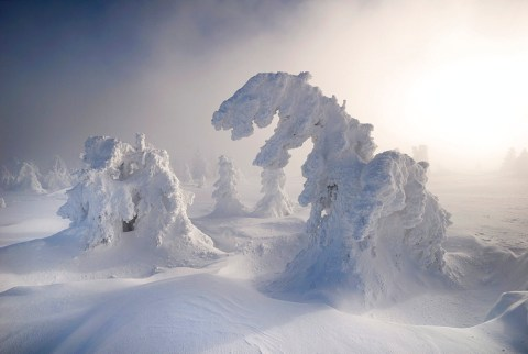 Snow-covered pines in fog and mist on Mt. Brocken, Saxony-Anhalt, Germany, Europe