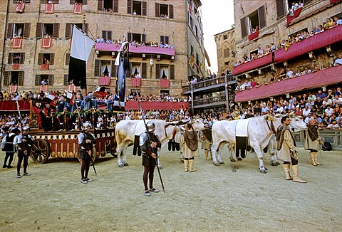 Stock photo of triumph wagon at Palio horse race, Sienna