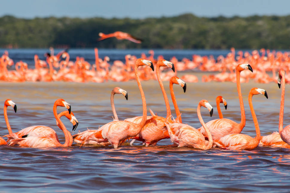 Image result for flamingos in mexico