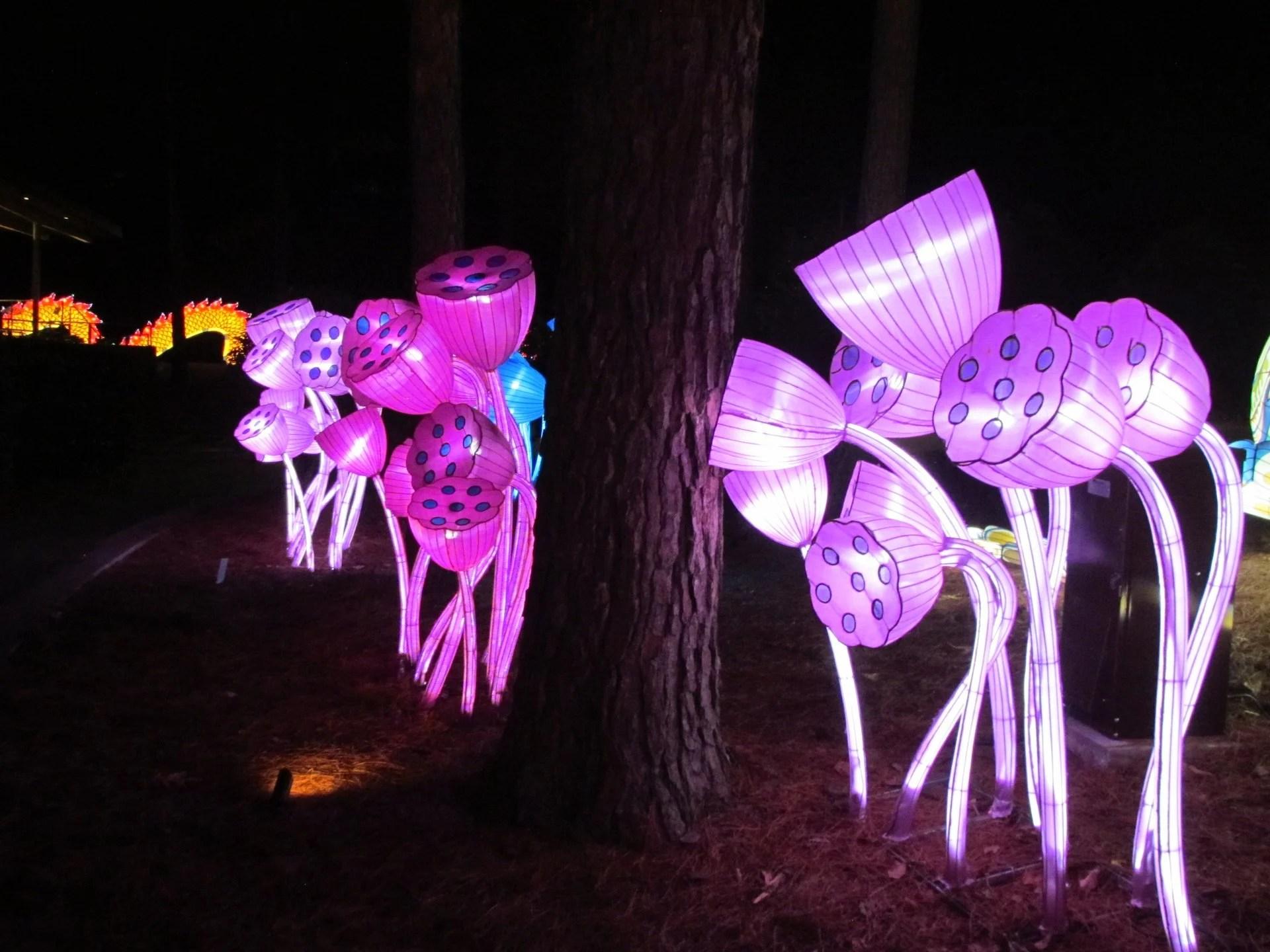 Memphis Zoo Lights Dates