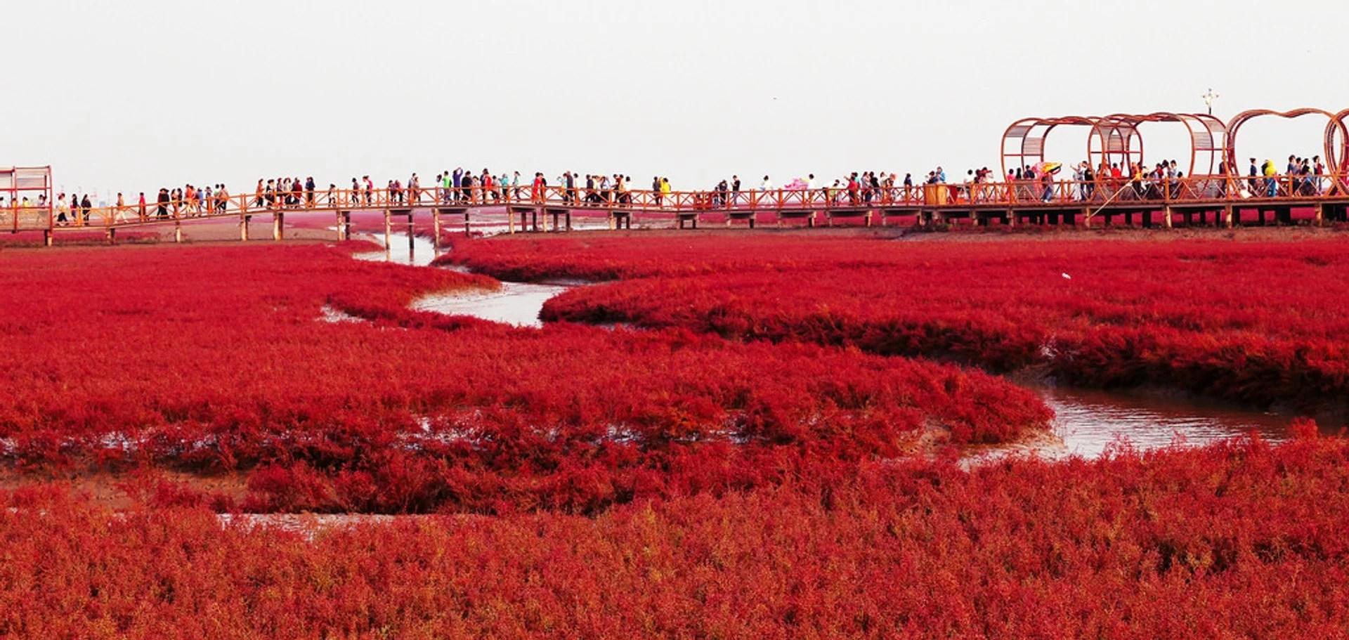 Pantai merah Panjin, China