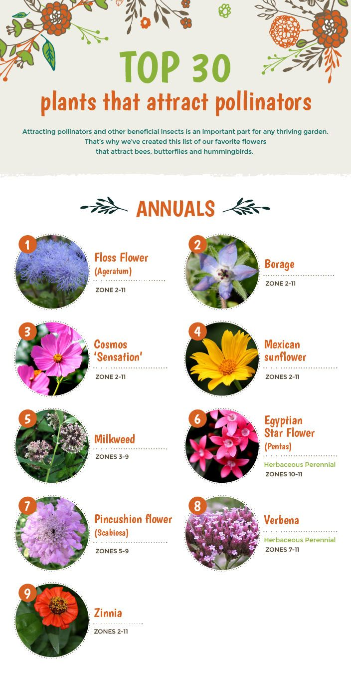 Top 30 Plants That Attract Pollinators
