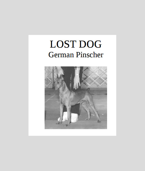 Lost Dog Flyer Template. Pics Photos These Lost Pet Flyers Are