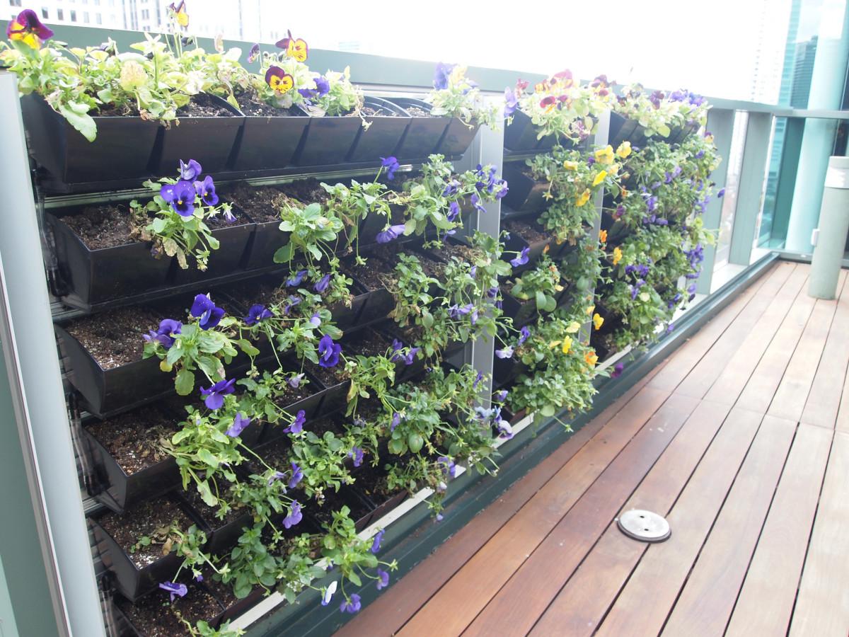 patio vegetable garden